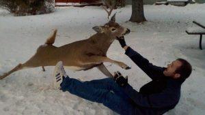 deer-attack-300x169